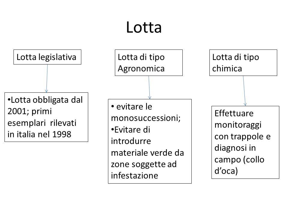 Lotta Lotta legislativaLotta di tipo Agronomica Lotta di tipo chimica Lotta obbligata dal 2001; primi esemplari rilevati in italia nel 1998 evitare le