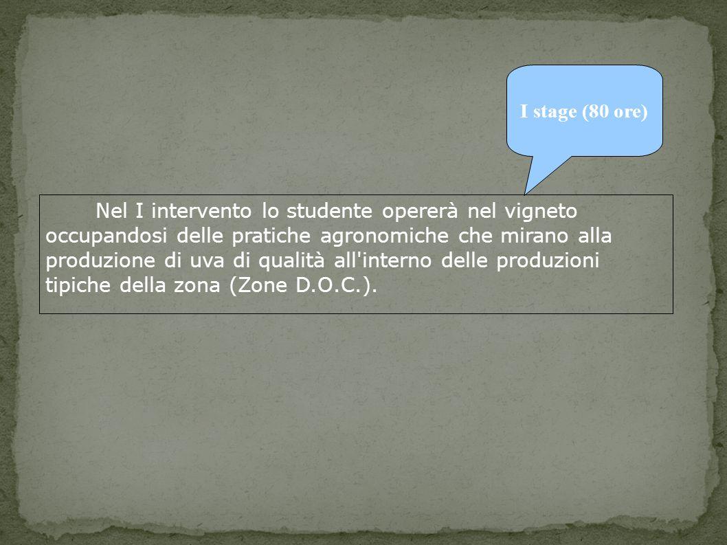 I stage (80 ore) Nel I intervento lo studente opererà nel vigneto occupandosi delle pratiche agronomiche che mirano alla produzione di uva di qualità all interno delle produzioni tipiche della zona (Zone D.O.C.).