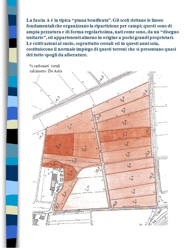 La fascia A è la tipica piana bonificata. Gli scoli dettano le lineee fondamentali che organizzano la ripartizione per campi; questi sono di ampia pez