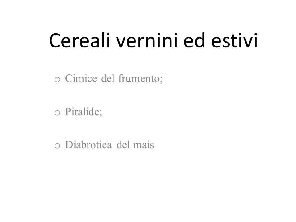 o Cimice del frumento; o Piralide; o Diabrotica del mais Cereali vernini ed estivi