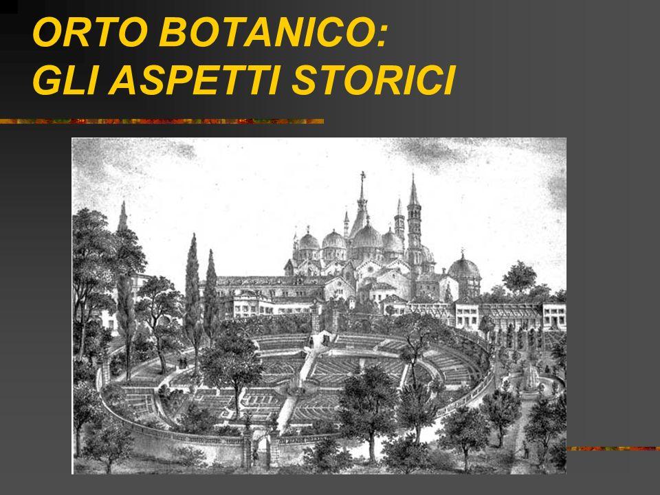 CENNI STORICI Nasce nel 1545 ad opera di Francesco Bonafede, commissionario della Serenissima Repubblica di Venezia per la coltivazione delle piante medicinali.