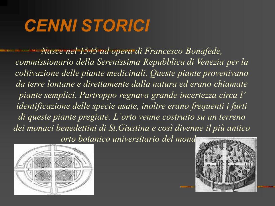 CENNI STORICI Nasce nel 1545 ad opera di Francesco Bonafede, commissionario della Serenissima Repubblica di Venezia per la coltivazione delle piante m