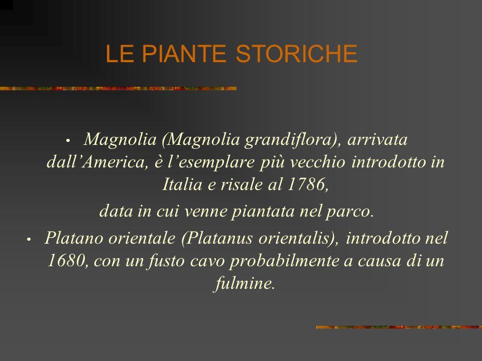 Magnolia (Magnolia grandiflora), arrivata dallAmerica, è lesemplare più vecchio introdotto in Italia e risale al 1786, data in cui venne piantata nel