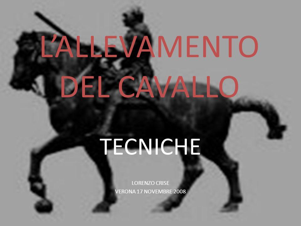 LALLEVAMENTO DEL CAVALLO TECNICHE LORENZO CRISE VERONA 17 NOVEMBRE 2008