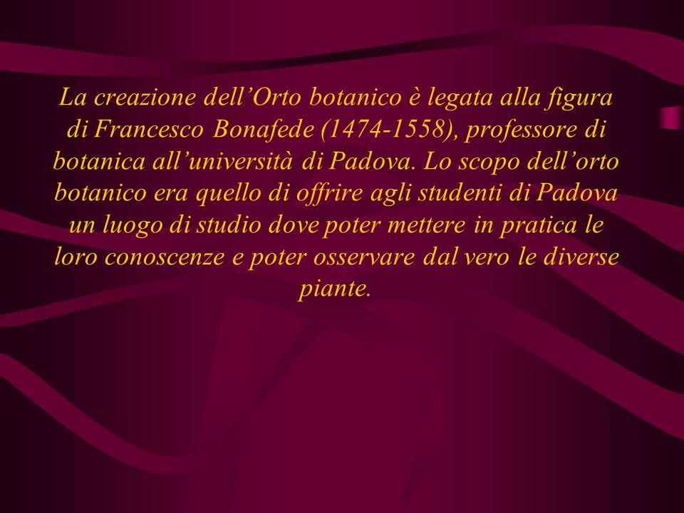La creazione dellOrto botanico è legata alla figura di Francesco Bonafede (1474-1558), professore di botanica alluniversità di Padova. Lo scopo dellor