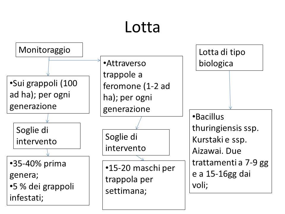 Lotta Monitoraggio Lotta di tipo biologica Sui grappoli (100 ad ha); per ogni generazione Bacillus thuringiensis ssp. Kurstaki e ssp. Aizawai. Due tra