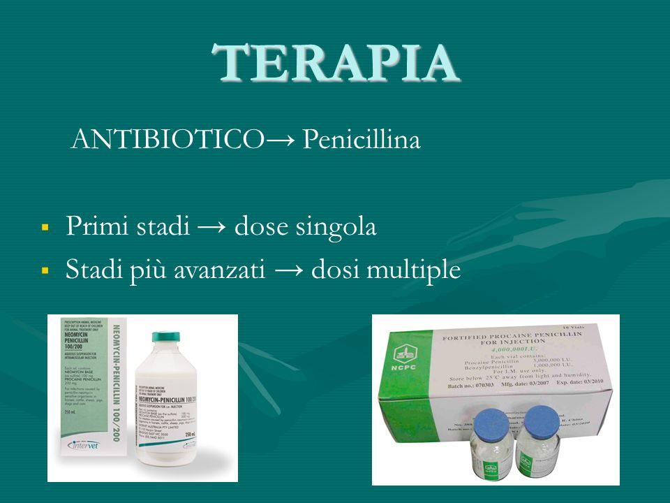 TERAPIA ANTIBIOTICO Penicillina Primi stadi dose singola Stadi più avanzati dosi multiple