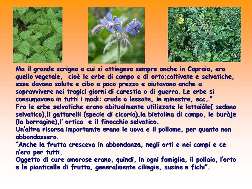 Ma il grande scrigno a cui si attingeva sempre anche in Capraia, era quello vegetale, cioè le erbe di campo e di orto;coltivate e selvatiche, esse dav