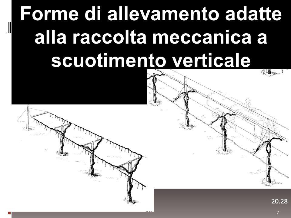 7 20.29 Forme di allevamento adatte alla raccolta meccanica a scuotimento verticale