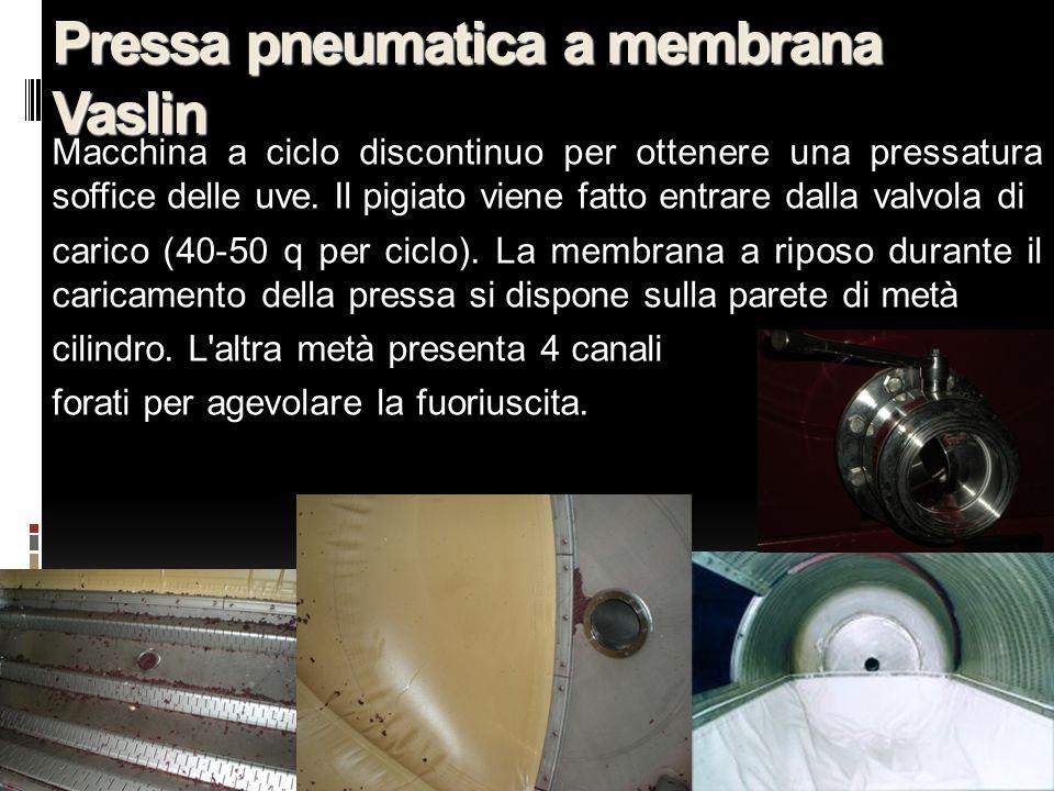 18 Pressa pneumatica a membrana Vaslin Macchina a ciclo discontinuo per ottenere una pressatura soffice delle uve. Il pigiato viene fatto entrare dall