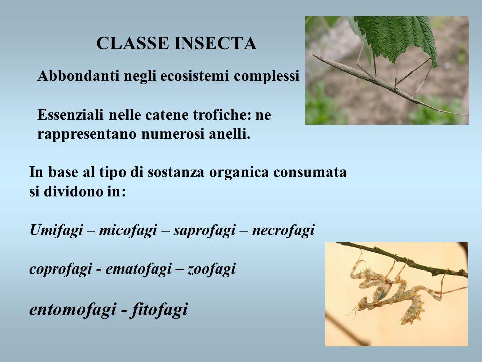 Abbondanti negli ecosistemi complessi Essenziali nelle catene trofiche: ne rappresentano numerosi anelli. In base al tipo di sostanza organica consuma