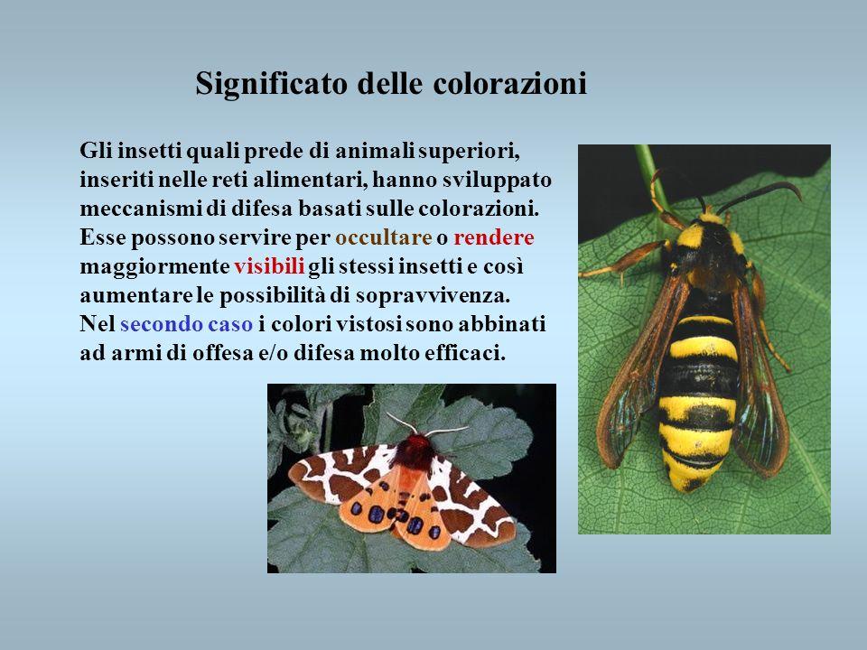 Significato delle colorazioni Gli insetti quali prede di animali superiori, inseriti nelle reti alimentari, hanno sviluppato meccanismi di difesa basa