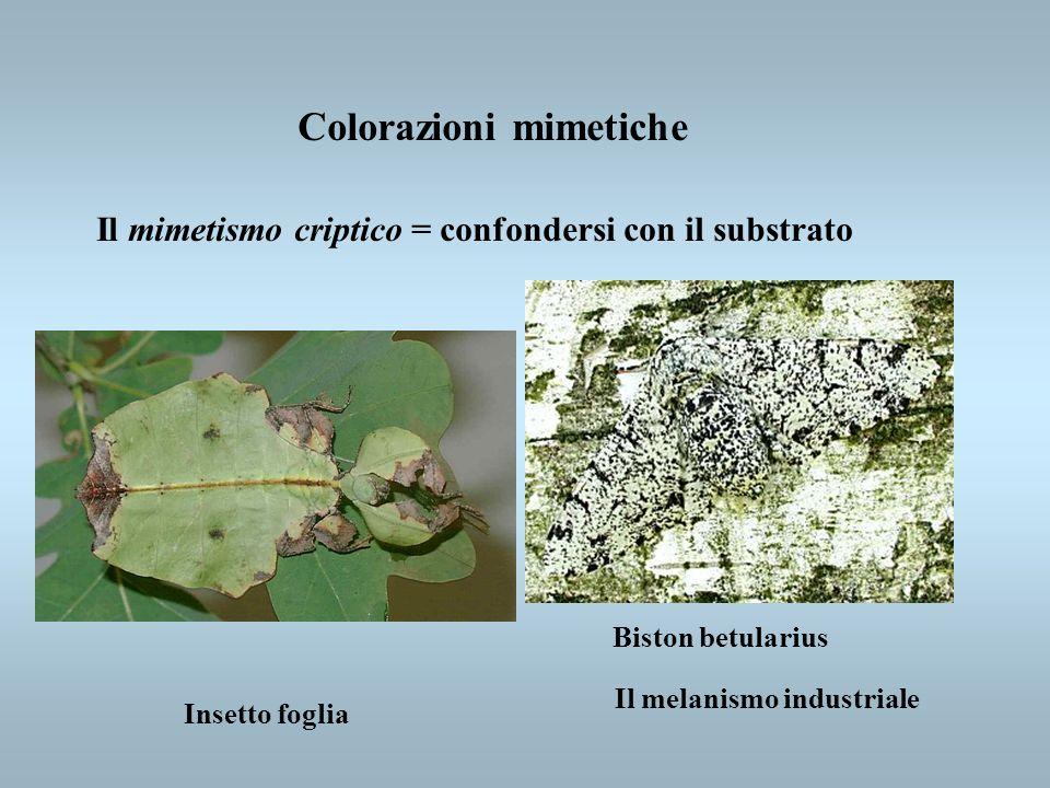 Colorazioni mimetiche Il mimetismo criptico = confondersi con il substrato Insetto foglia Biston betularius Il melanismo industriale