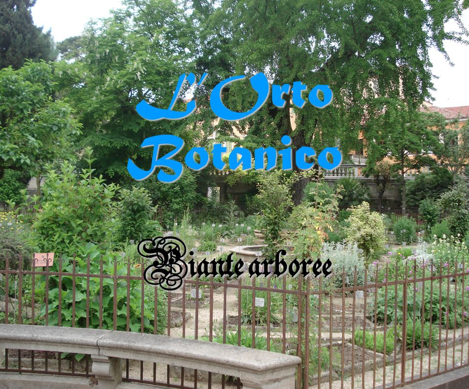 LOrto Botanico Piante arboree