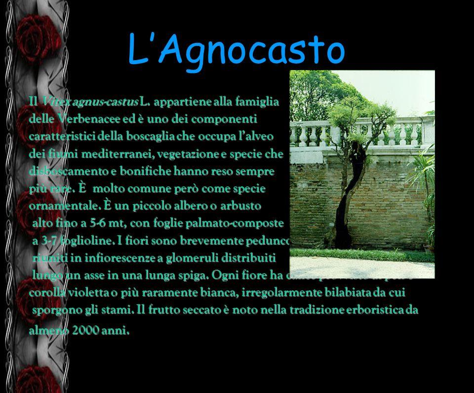 LAgnocasto Il Vitex agnus-castus L. appartiene alla famiglia delle Verbenacee ed è uno dei componenti caratteristici della boscaglia che occupa lalveo