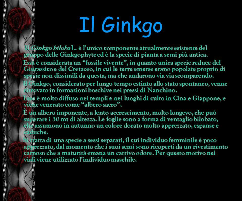 Il Ginkgo Il Ginkgo biloba L. è lunico componente attualmente esistente del gruppo delle Ginkgophyte ed è la specie di pianta a semi più antica. Essa
