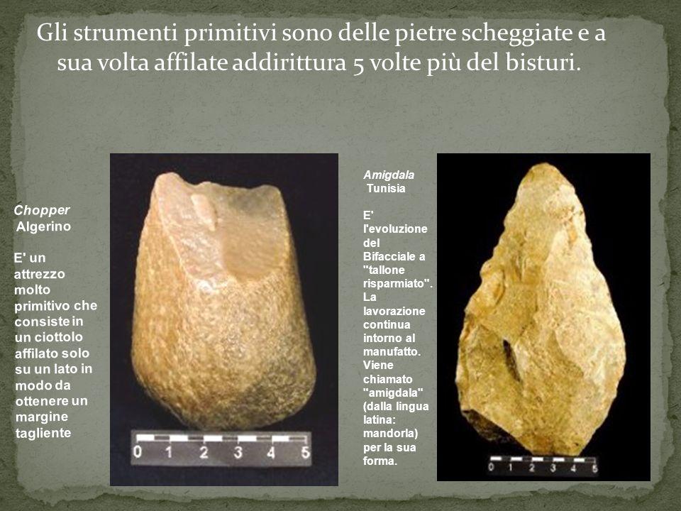 Gli strumenti primitivi sono delle pietre scheggiate e a sua volta affilate addirittura 5 volte più del bisturi. Amigdala Tunisia E' l'evoluzione del