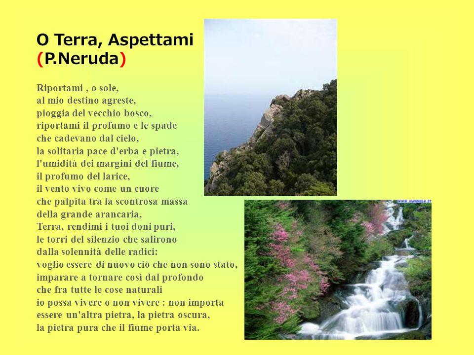 O Terra, Aspettami (P.Neruda) Riportami, o sole, al mio destino agreste, pioggia del vecchio bosco, riportami il profumo e le spade che cadevano dal c