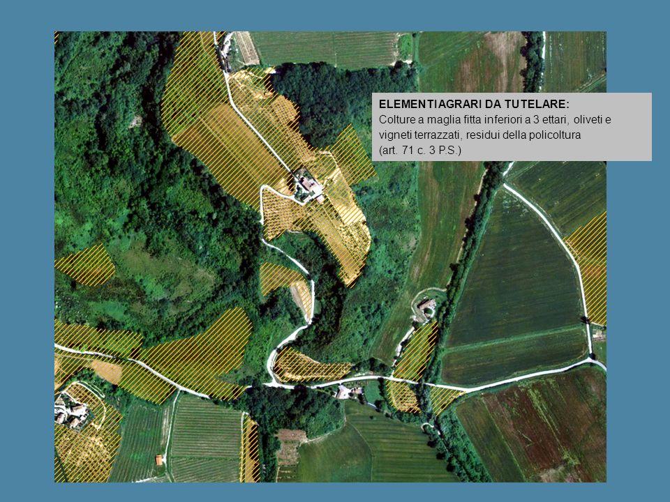 ELEMENTI AGRARI DA TUTELARE: Colture a maglia fitta inferiori a 3 ettari, oliveti e vigneti terrazzati, residui della policoltura (art. 71 c. 3 P.S.)