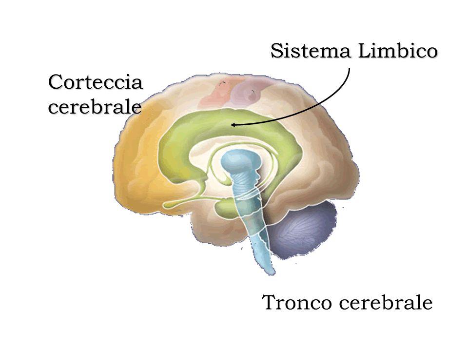 Tronco cerebrale Corteccia cerebrale Sistema Limbico