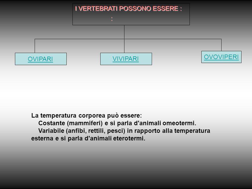 : I VERTEBRATI POSSONO ESSERE : OVIPARI VIVIPARI OVOVIPERI La temperatura corporea può essere: Costante (mammiferi) e si parla d animali omeotermi.