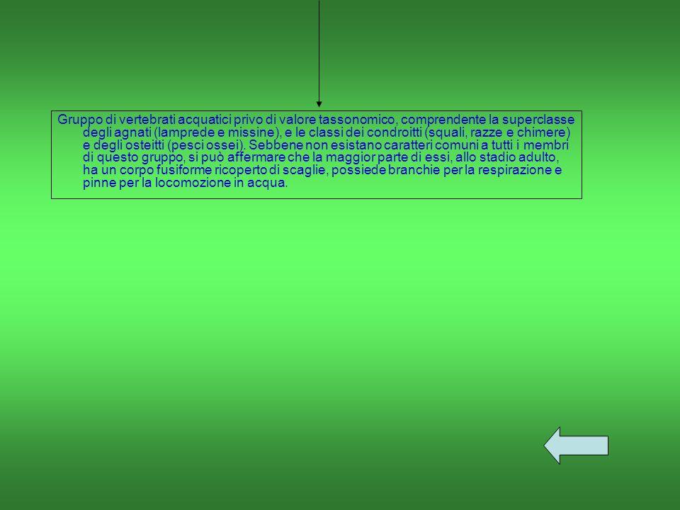 Gruppo di vertebrati acquatici privo di valore tassonomico, comprendente la superclasse degli agnati (lamprede e missine), e le classi dei condroitti (squali, razze e chimere) e degli osteitti (pesci ossei).
