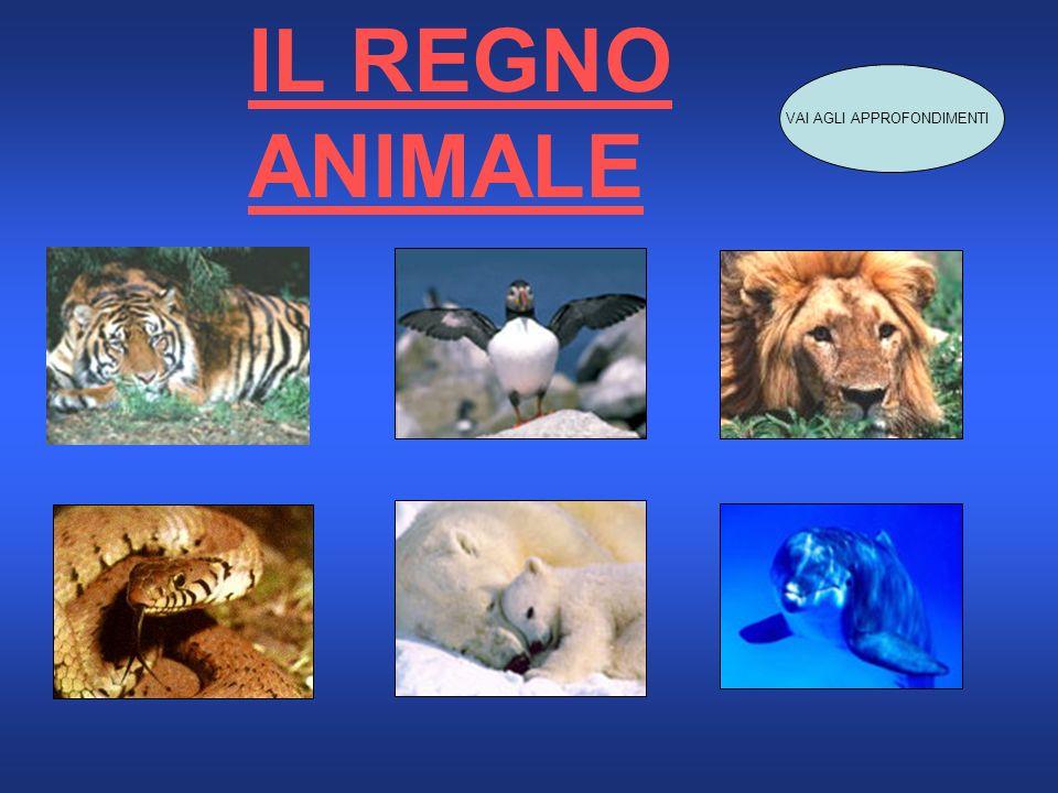 IL REGNO ANIMALE VAI AGLI APPROFONDIMENTI