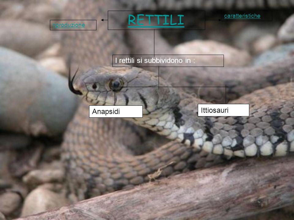 RETTILI Anapsidi Ittiosauri I rettili si subbividono in : caratteristiche riproduzione