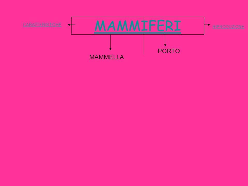 MAMMIFERI MAMMELLA PORTO CARATTERISTICHE RIPRODUZIONE