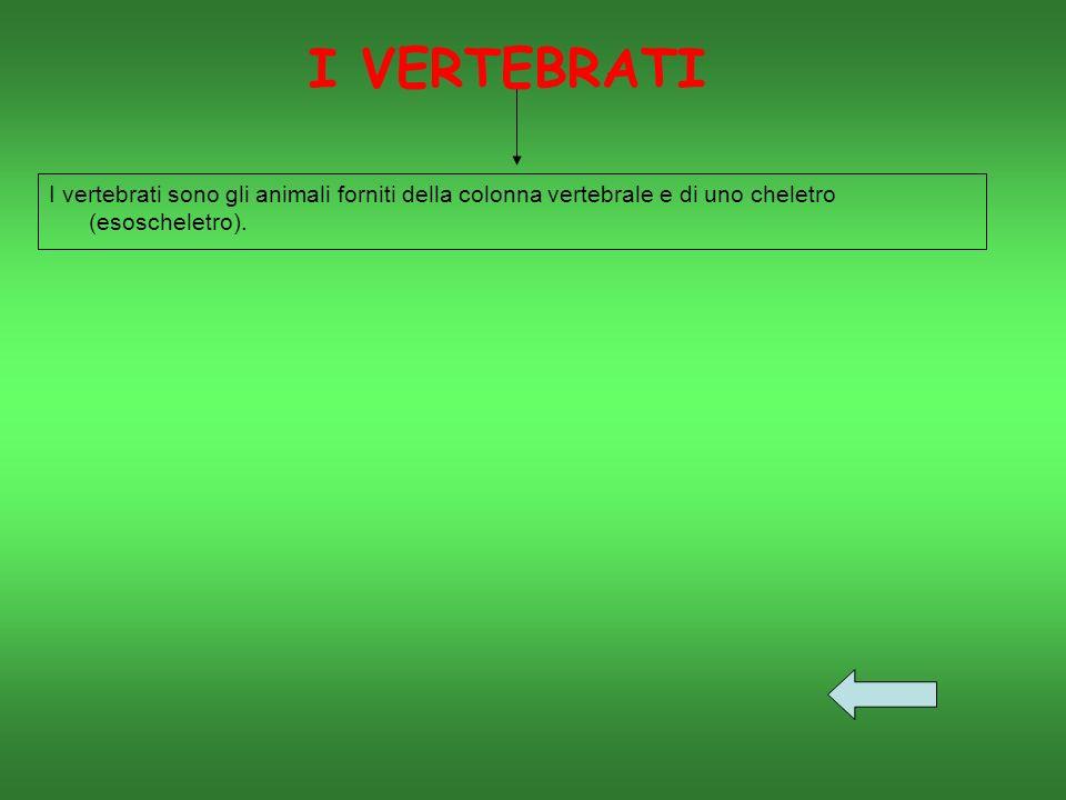 I vertebrati sono gli animali forniti della colonna vertebrale e di uno cheletro (esoscheletro).