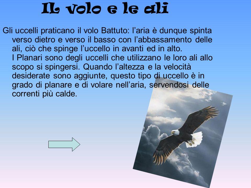 IL volo e le ali Gli uccelli praticano il volo Battuto: laria è dunque spinta verso dietro e verso il basso con labbassamento delle ali, ciò che sping