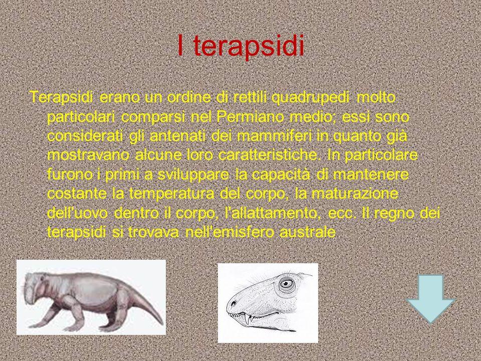 I terapsidi Terapsidi erano un ordine di rettili quadrupedi molto particolari comparsi nel Permiano medio; essi sono considerati gli antenati dei mamm