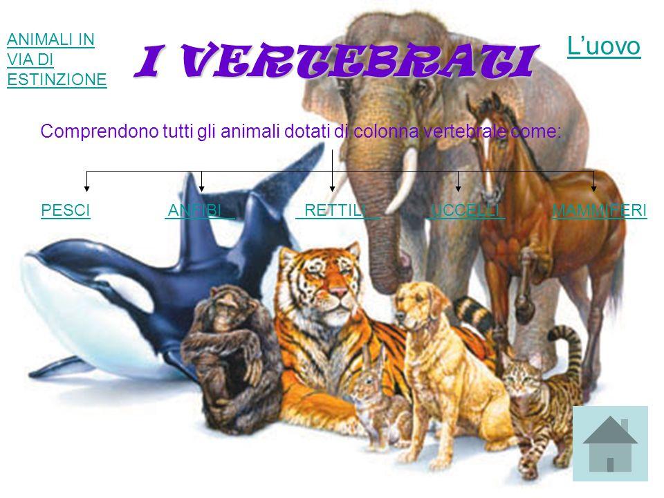 I VERTEBRATI Comprendono tutti gli animali dotati di colonna vertebrale come: PESCIPESCI ANFIBI RETTILI UCCELLI MAMMIFERI ANFIBI RETTILI UCCELLI MAMMI