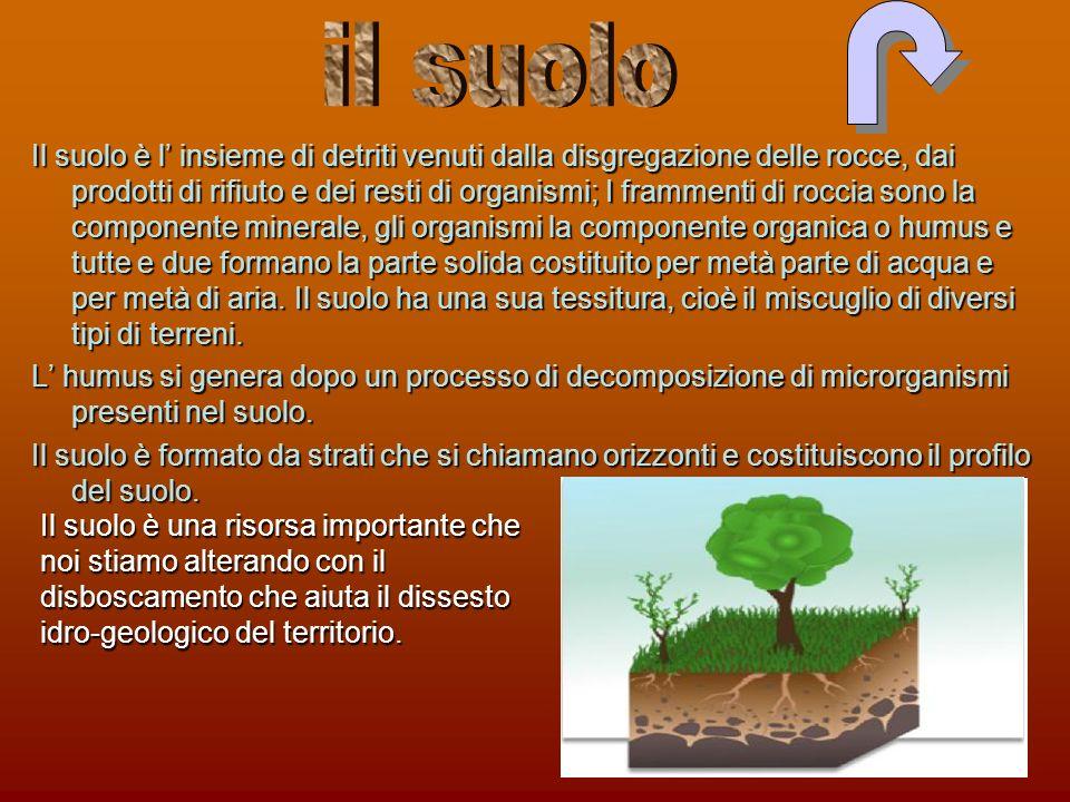 Il suolo è l insieme di detriti venuti dalla disgregazione delle rocce, dai prodotti di rifiuto e dei resti di organismi; I frammenti di roccia sono l