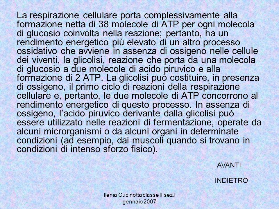Ilenia Cucinotta classe II sez.I -gennaio 2007- La respirazione cellulare porta complessivamente alla formazione netta di 38 molecole di ATP per ogni