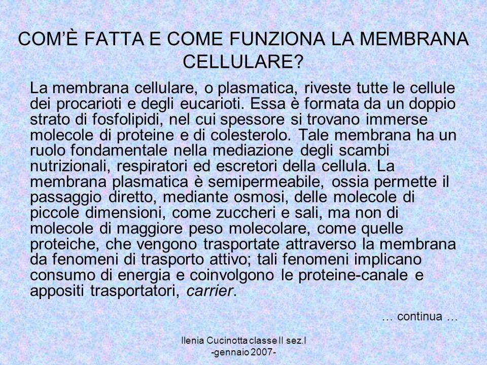 Ilenia Cucinotta classe II sez.I -gennaio 2007- COMÈ FATTA E COME FUNZIONA LA MEMBRANA CELLULARE? La membrana cellulare, o plasmatica, riveste tutte l