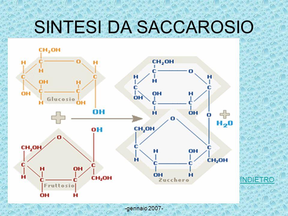 Ilenia Cucinotta classe II sez.I -gennaio 2007- SINTESI DA SACCAROSIO INDIETRO