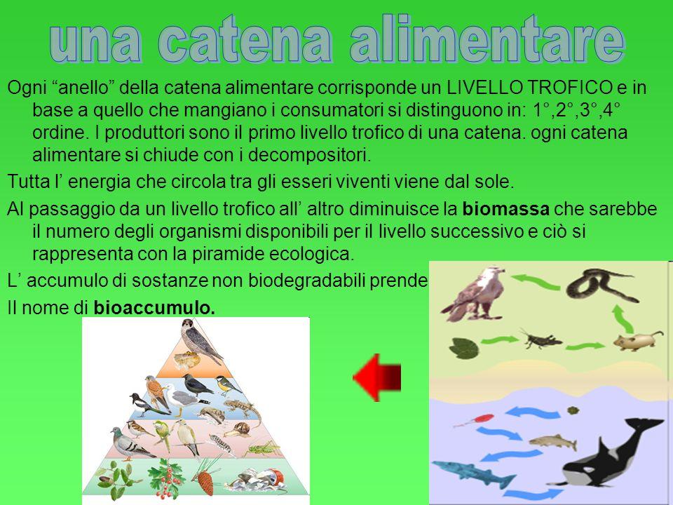 Ogni organismo e specie occupa un determinato habitat. Esempi di habitat