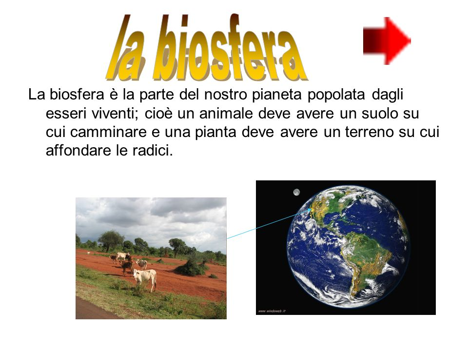 La biosfera è la parte del nostro pianeta popolata dagli esseri viventi; cioè un animale deve avere un suolo su cui camminare e una pianta deve avere