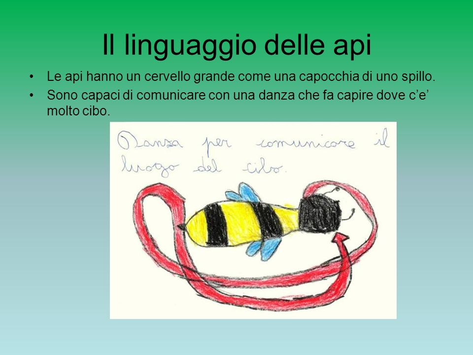 Il linguaggio delle api Le api hanno un cervello grande come una capocchia di uno spillo. Sono capaci di comunicare con una danza che fa capire dove c