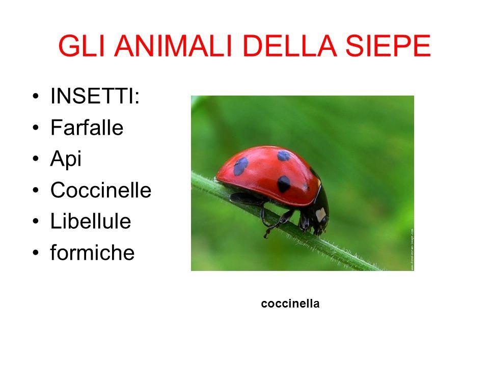GLI ANIMALI DELLA SIEPE INSETTI: Farfalle Api Coccinelle Libellule formiche coccinella