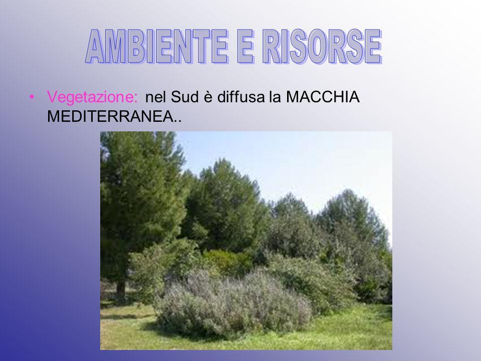 Vegetazione: nel Sud è diffusa la MACCHIA MEDITERRANEA..