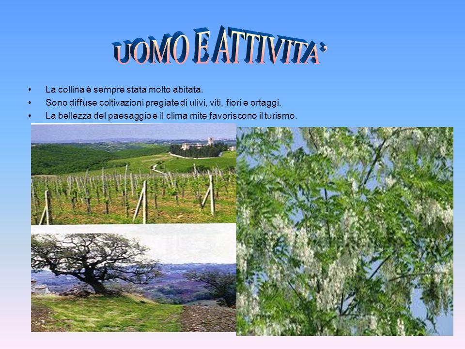 La collina è sempre stata molto abitata. Sono diffuse coltivazioni pregiate di ulivi, viti, fiori e ortaggi. La bellezza del paesaggio e il clima mite