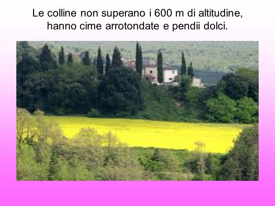 Le colline non superano i 600 m di altitudine, hanno cime arrotondate e pendii dolci.