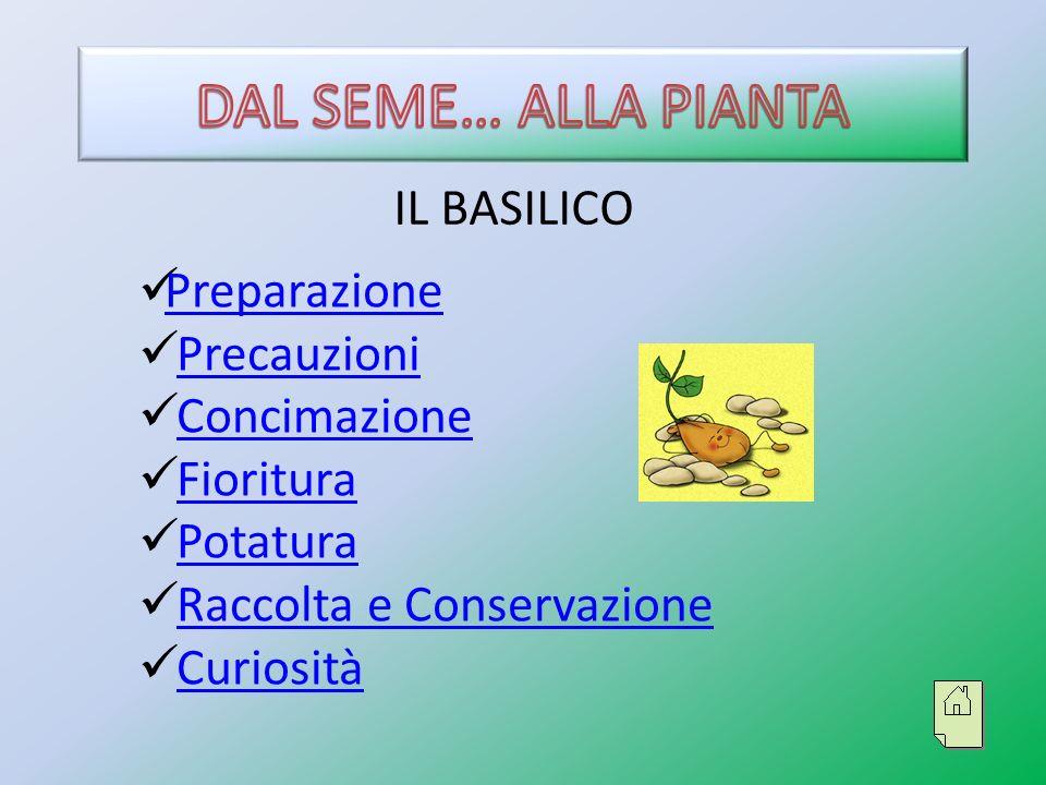 PREPARAZIONE Sistemare il terriccio nei vasi Inserire pochi semi di basilico basilico Aggiungere una piccola quantità di acqua Deporre il vaso su un davanzale ben esposto alla luce e al riparo dalle correnti.