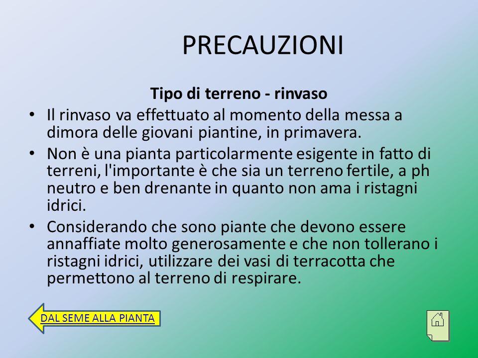 Concimazione Se si è usato o è stato trapiantato in un buon terriccio fertile non necessita di concimazioni per la durata del suo ciclo vegetativo.