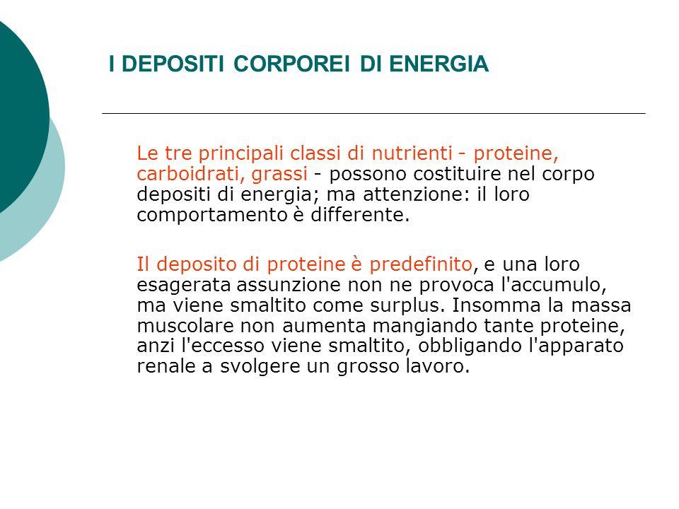I DEPOSITI CORPOREI DI ENERGIA Le tre principali classi di nutrienti - proteine, carboidrati, grassi - possono costituire nel corpo depositi di energi