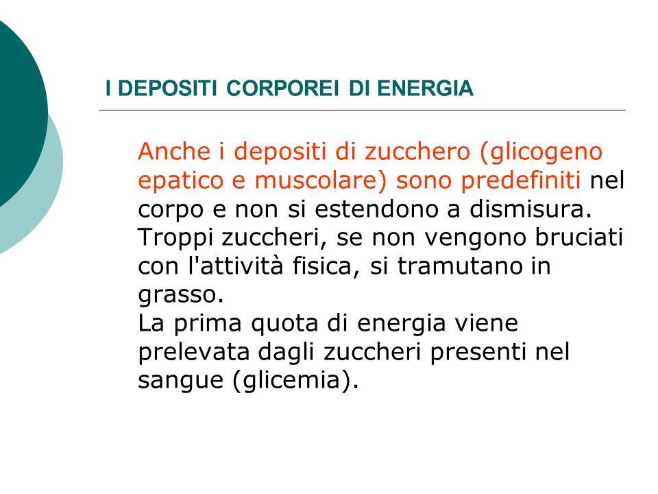 I DEPOSITI CORPOREI DI ENERGIA Anche i depositi di zucchero (glicogeno epatico e muscolare) sono predefiniti nel corpo e non si estendono a dismisura.