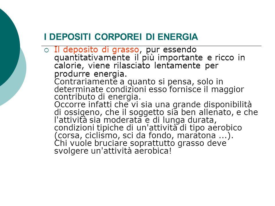 I DEPOSITI CORPOREI DI ENERGIA Il deposito di grasso, pur essendo quantitativamente il più importante e ricco in calorie, viene rilasciato lentamente