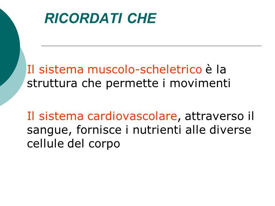 RICORDATI CHE Il sistema muscolo-scheletrico è la struttura che permette i movimenti Il sistema cardiovascolare, attraverso il sangue, fornisce i nutr